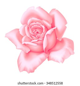 Rose pink flower decorative vintage illustration isolated on white background