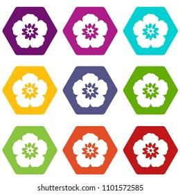 Rose of Sharon, korean national flower icon set many color hexahedron isolated on white illustration