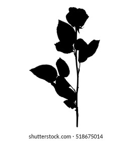 Rose silhouette isolated on white