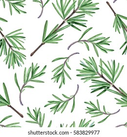 Rosemary herb. Watercolor seamless pattern.