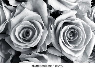 Roses - Black&White