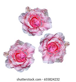 Roses. Flowers. Isolated. Stylization: watercolor.
