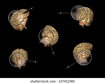 Rotating Brain with Magnifier  Anatomically correct brain rotating under a moving magnifying glass. Image shows 5 poses.