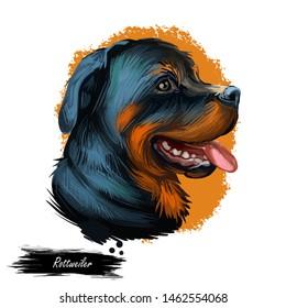 Rottweiler dog portrait isolated on white. Digital art illustration hand drawn for web, t-shirt print and puppy cover design. Rott Rottie, Rottweiler Metzgerhund, Rottweil butchers dog, herd livestock