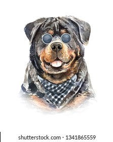 Rottweiler. Portrait of a dog. Set with small dogs. Watercolor hand drawn illustration.Watercolor Rottweiler with plaid scarf and sunglasses layer path, clipping path isolated on white background