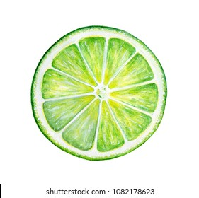 Round slice of green fresh lime. Culinary fruit, natural source of vitamin C, component of many classic cocktails and traditional pies. Hand painted watercolor drawing on white background, isolated.
