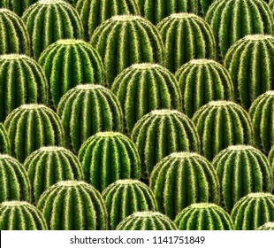 Rows of green catus. 3d illustration
