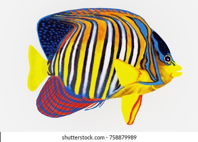 Royal Angelfish 3d illustration - The Royal Angelfish is a saltwater species reef fish in tropical regions of Indo-Pacific oceans.