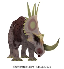 Rubeosaurus Dinosaur on White 3D illustration - Rubeosaurus was a herbivorous Ceratopsian dinosaur that lived in North America during the Cretaceous Period.