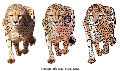 Running cheetah, isolated on white background in different cartoon (cartoonized) styles