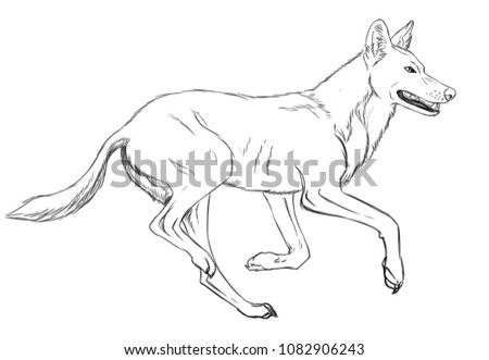 Running Indian Wolf Stock Illustration 1082906243