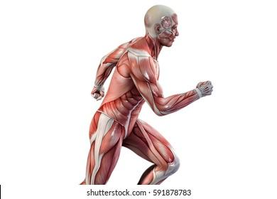 Running man anatomy vision. 3D illustration.