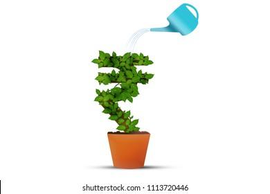 Rupee Money Plant Rupee Symbol