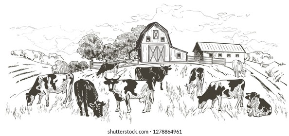 Rural landscape with flock of cows, calves, field, Old Barn, house, trees, animals, fences and other elements, panorama. Hand drawn engraving illustration