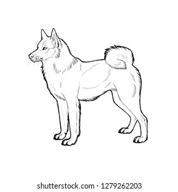 Russo-European Laika. Hand drawn illustration with russian dog breed.