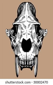Saber Tooth Cat Skull