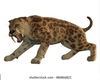 Saber-Tooth Cat Angry 3D Illustration - Saber-Tooth Tiger was an extinct large carnivore that lived worldwide during the Eocene to Pleistocene Eras.