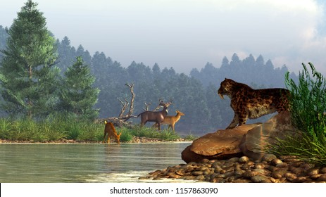 A saber-toothed cat gazes across a river at a family of deer.  The Pleistocene hunter is foiled by the deep waters and can only watch as his potential prey casually drinks on the shore. 3D Rendering
