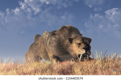 A saber-toothed cat stalks its prey in tall golden grass. The ferocious prehistoric predator crouches low and stares intently as it bears its teeth and prepares to pounce. 3D Rendering