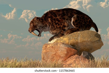 A saber-toothed cat stands atop a boulder on a grassy plain. The ferocious prehistoric predator bears his wicked curved teeth as he looks across the golden grass. 3D Rendering