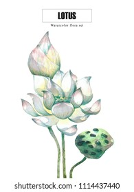 Sacred lotus water lily | watercolor nature and botanic painting with clipping path
