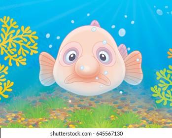 Sad Blob fish