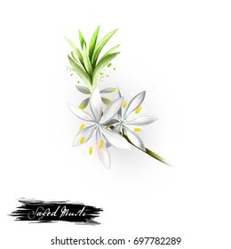 Safed Musli Natural Treatment for Sexual Weakness and Impotence ayurvedic herb digital art illustration. Healthy organic spa plant widely used in treatment, for preparation medicines, natural usages