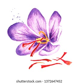 Saffron flower with threads. Watercolor hand drawn illustration,  isolated on white background
