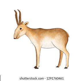 Saiga - animal endangered (saiga tatarica). Illustration.