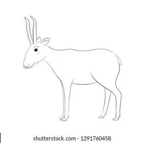 Saiga - animal endangered (saiga tatarica). Sketch.