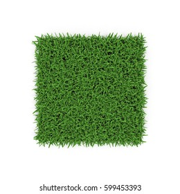 Saint Augustine Warm Season Grass on white. 3D illustration