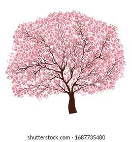 Sakura tree with white background
