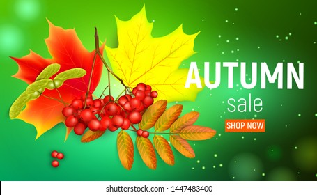 Sales banner with maple autumn leaves and rowan branches with ashberry on a green background. Autumn maple leaf and red rowan branches with ashberry on a green background.