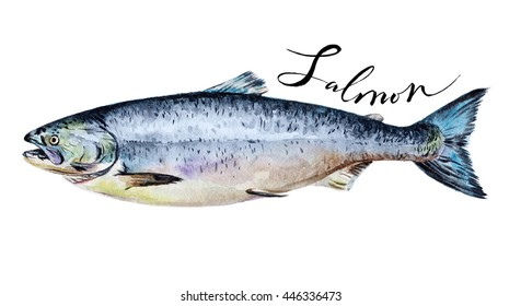 Salmon fish whole isolated on a white background