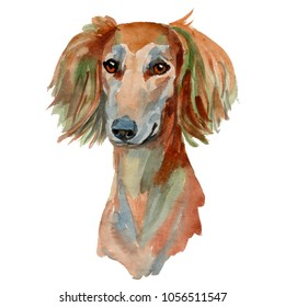 Saluki dog - hand painted, isolated watercolor dog