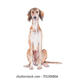 Saluki dog. Watercolor painting.