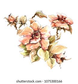 sammer flower watercolor