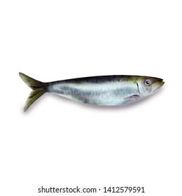 Sardine fish animal realistic illustration