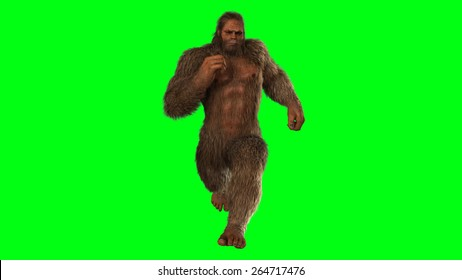 Sasquatch - bigfoot seperated on green screen