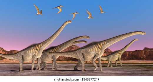 Sauroposeidon Dinosaur Herd 3D illustration - A flock of Pteranodon reptiles fly over a herd of Sauroposeidon dinosaurs walking together during the Cretaceous Period of North America.