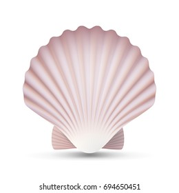 Scallop Seashell Realistic Sea Shell Close Up. Isolated On White. Illustration