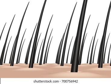scalp. 3D illustration.