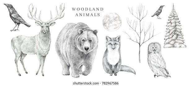 Scandinavian forest animals set. Hand drawn pencil illustrations.
