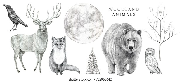 Scandinavian forest animals set. Hand drawn pencil illustrations.