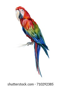 Scarlet macaw parrot. Ara macao. Watercolor illustration of tropical bird. Trendy artwork with tropic summertime motif. Exotic art. Design for fabric and decor.