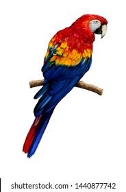 Scarlet Macaw, Tropical Big Parrot Illustration.