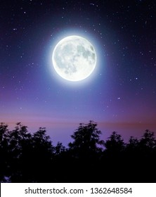 Scene of the Moon above the forest,3d rendering