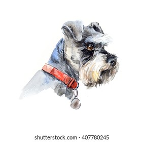 Schnauzer. Portrait of a dog. Set with small dogs. Watercolor hand drawn illustration