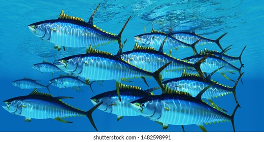School of Yellowfin Tuna 3d illustration - Yellowfin tuna fish swim in large groups looking for their prey such as large schools of ocean herring fish.