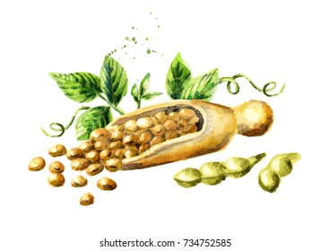 Scoop with soybeans. Watercolor hand drawn illustration